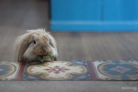 week#2_bunny